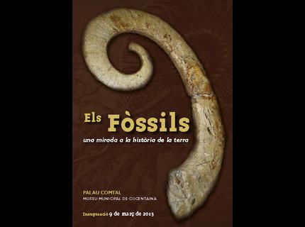 Els Fòssils: Una mirada a la història de la terra
