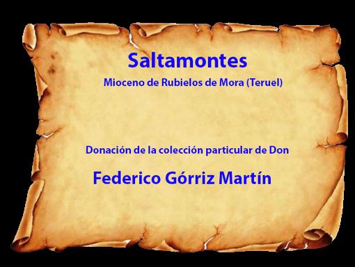 Donación lámina con saltamontes del Mioceno